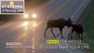 Travelers Advisory – BRAKE FOR MOOSE, It Could Save Your Life